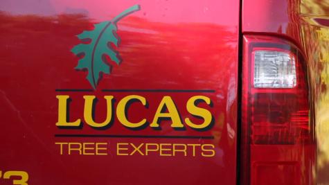 Lucas Tree